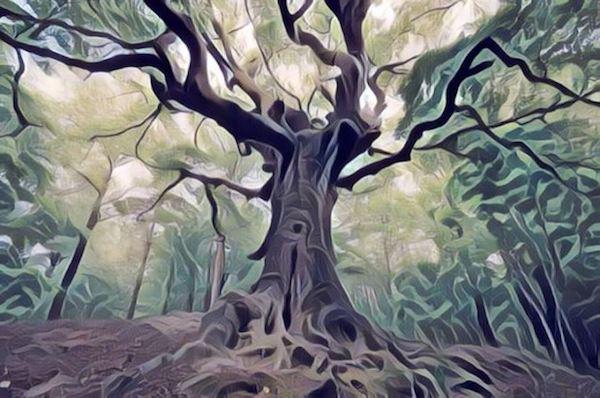 Znaczenie snu Drzewo